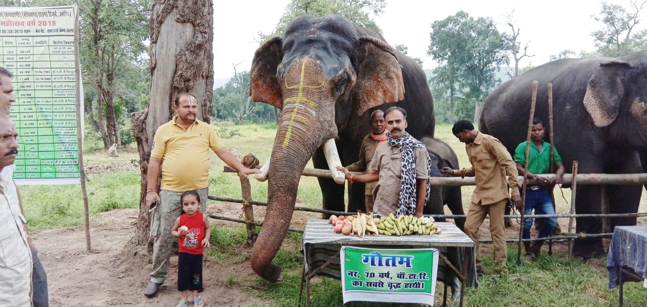 बांधवगढ़ मे प्रति वर्ष की भांति इस वर्ष भी मनाया जाएगा हाथी महोत्सव
