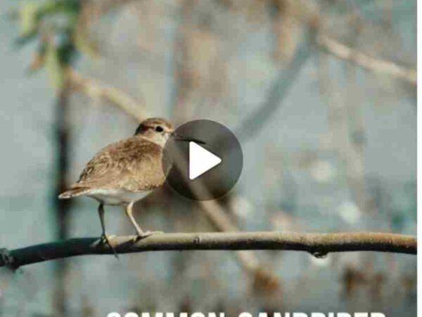 """कोपरा पक्षी महोत्सव"""" पर बिलासपुर वन विभाग ने आकर्षक वीडियो जारी किया ,पंजीयन कार्य अंतिम चरण पर :डीएफओ निशांत"""